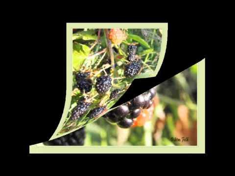 Цвета осеннего сада Картинки, фото Осень в саду, цветы