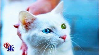 Кошка Муська была жутко ревнивой и с появлением в семье малыша ушла из дома навсегда