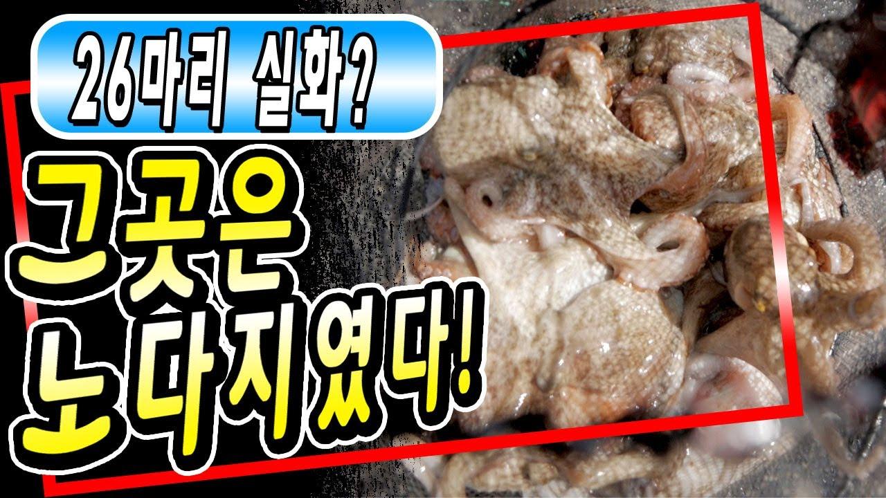 문어의 1번지00 포인트  모두가 경악한 아침피딩 1시간만에 10마리 문어낚시의 메카! (Octopus Fishing.Lure)