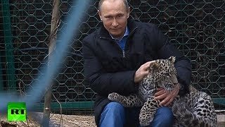 Repeat youtube video Video: Putin enters leopard cage at Sochi National Park