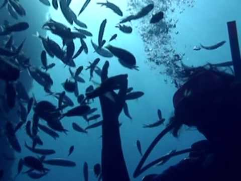Greece Scuba Diving - Explore the underwaters of Aegean Sea