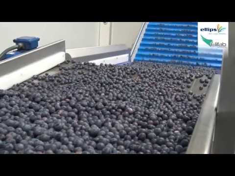 Blueberry grading