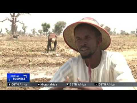 Nigeria farmers struggle with high demand and high production costs