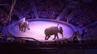 «Шоу слонов»