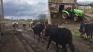 10 коров, мини ферма!  Обзор техники!