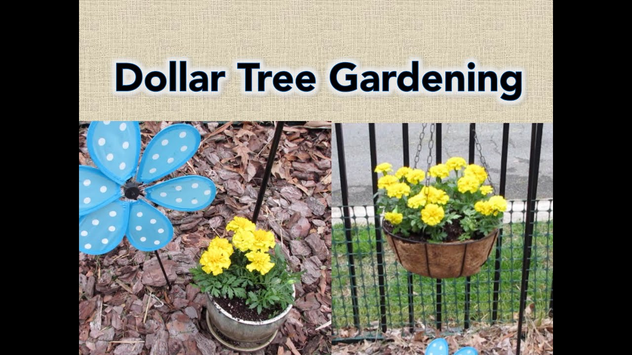 Dollar Tree Gardening | My Favorite Products   YouTube