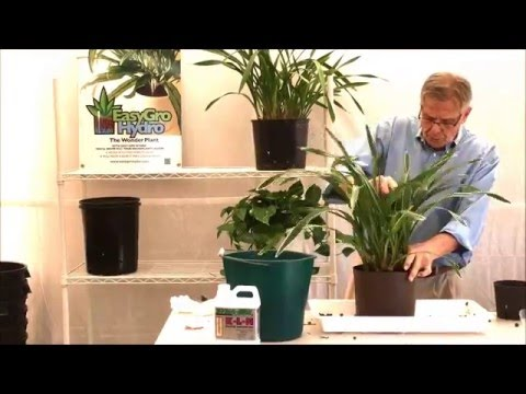 Repotting Cymbidium Orchids Plant 1 Youtube