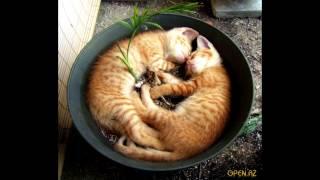 кото-фото,прикольные фотки кошек и котят
