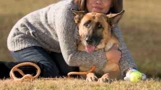 2013.5.11、愛犬シンディが13歳の大往生で天国へ旅立ちました。ありがと...