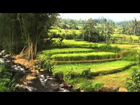 Subak - UNESCO World Heritage