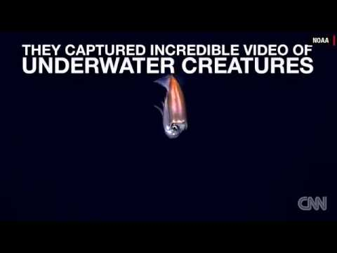 8267 tiere CNN Deep sea creature stuns explorers