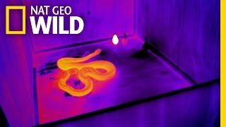 See Like a Snake | Animal Superpowers