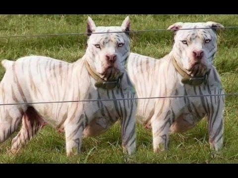 DOG BREED Best TERRIER Fastest Dog Breed [Mr Fahey]