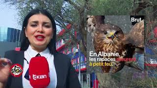 Stop  Shqiponja, simboli i kombit sonë, shitet në rrugë për 70-100 mijë lekë  (09 janar 2018)