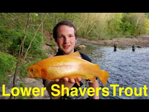 Trout Fishing West Virginia's Reduce Shavers Fork