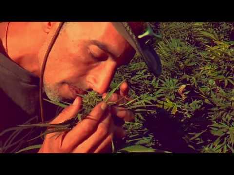 Dub All Sense ft. Monkey Jhayam - Franco Loja  ( Special Tribute )