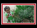 How excited baby to plucking flowers/ naughty activity of cute girl/ Manvi love flowers