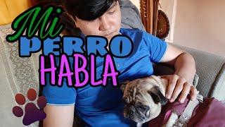 Mi perro HABLA!! - Sketch