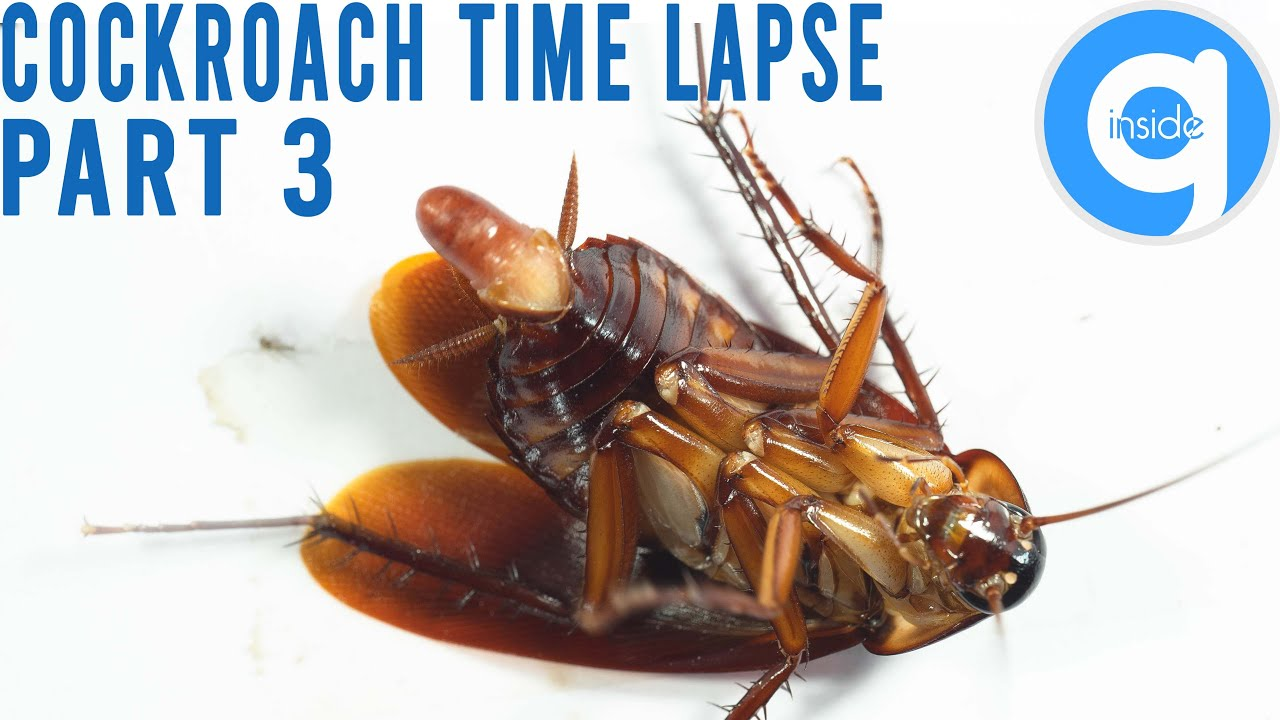 Cockroach Time Lapse Part 3