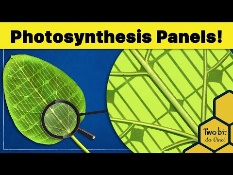 Breakthrough Solar Panels Store Energy Just Like Plants!
