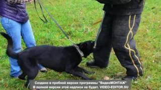 Dog training 40 (Тренировка)
