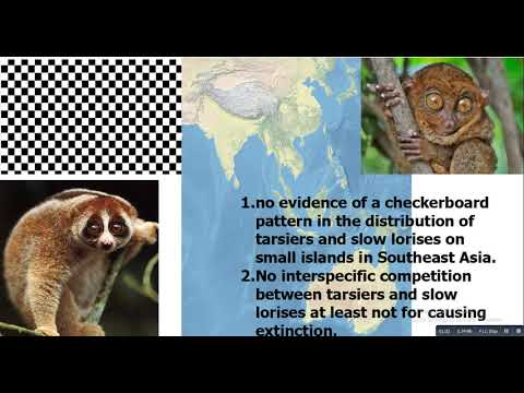 Group 10 Checkerboard patterns distribution patterns of tarsiers