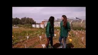 Sanidad Vegetal - Malherbología