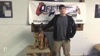 German Shepherd Owner's Testimonial After Lessons!  German Shepherd Trainers In Virginia