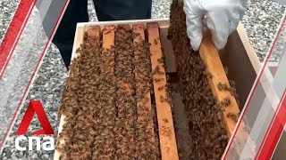 US army veterans find solace in beekeeping