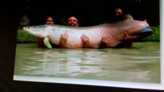 Top 7 największych ryb w polsce