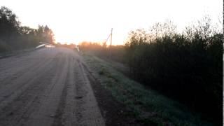Morning Birds singing