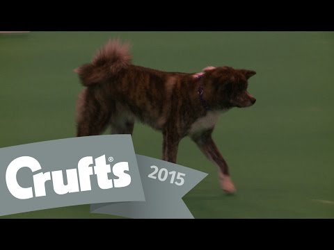 Obreedience - Part 6 - Collie, Miniature Schnauzer & Japanese Akita Inu | Crufts 2015