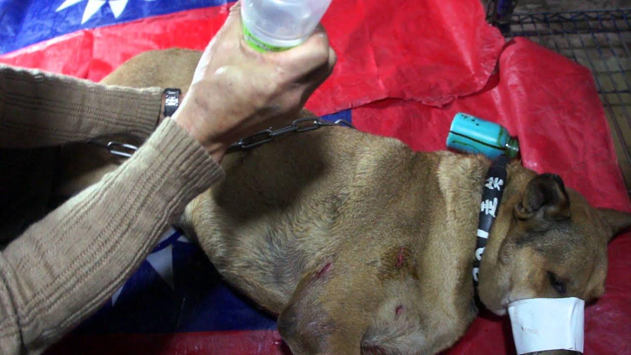 狗狗被狗咬傷。表面傷口處理概念方式【第一輯】狗王廟毛兒園臉書社團 - YouTube
