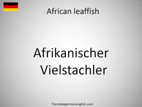 How to say African leaffish in German?
