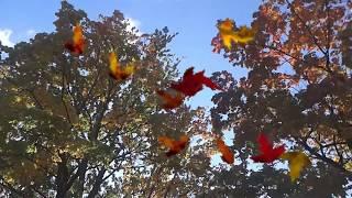 Осень  Белый День  CoverProShow Slideshow