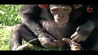 Những tình huống troll nhau hài hước của động vật - Cooku