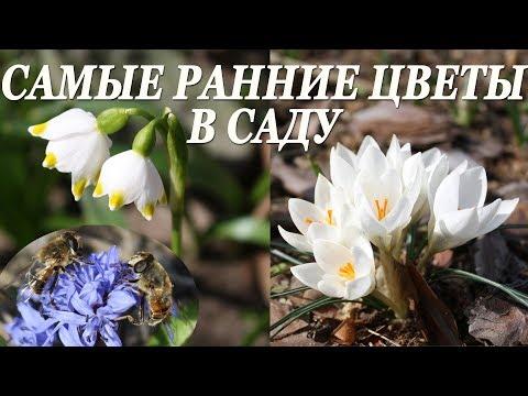 Вопрос: Какую окраску имеют цветки первоцветов о чём это говорит?