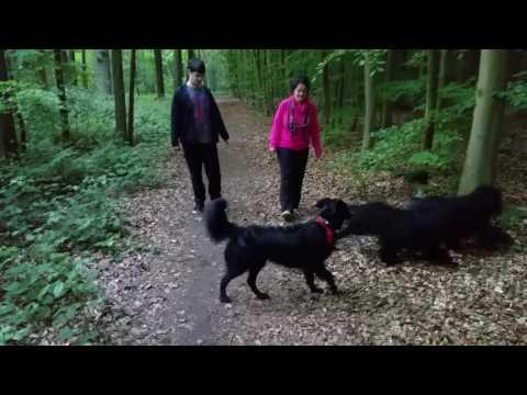 Fun Times! - Portuguese Water Dogs / Portugisische Wasserhunde