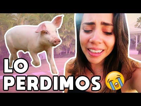 24 HORAS SIENDO PAPÁS - LO PERDIMOS 😭   What The Chic