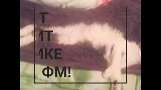 Когда кот приходит к SimkaFM