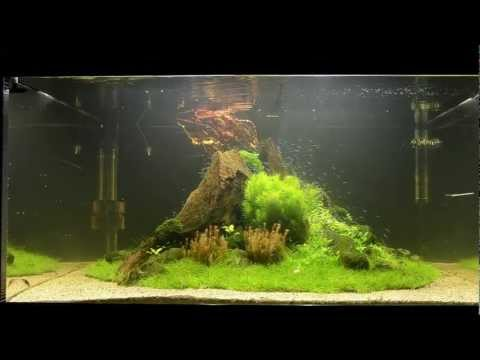 """Aquascape Tutorial """"Nature's Chaos"""" by James Findley - The Making Of"""