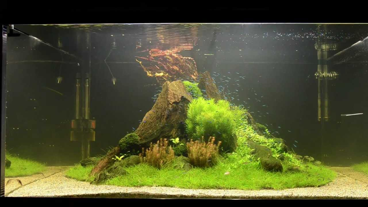 "Aquascape Tutorial ""nature's Chaos"" By James Findley  The"
