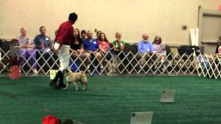 Hugorally Obedience 2014 Showcase