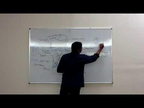 Anatomy & Physiology for Yoga Students   Respiratory System , Tapasya Yogashala Hebbal ,IM WELL Team