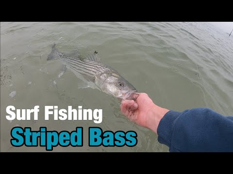 EARLY Morning Striped Bass Fishing! (FOGGY)