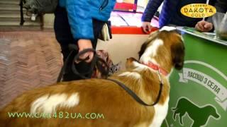 Выставка собак, Харьков, 30 октября 2016, видео