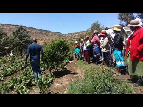 Agricultural training for small farmers, Lesotho.