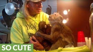 Monkey lovingly befriends monkey puppet