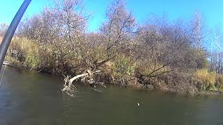 Осенний Хариус 1 Рыбалка на реке Чулым