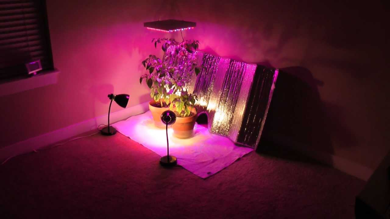 How Grow Northern Lights Indoors